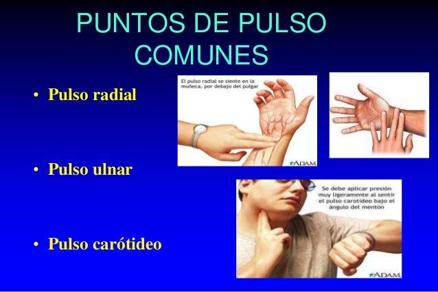 PUNTOS DE PULSO COMUNES • Pulso radial • Pulso ulnar • Pulso carótideo