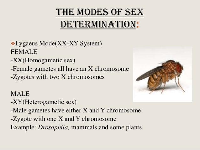 the lygaeus mode of sex determination is the in Coquitlam