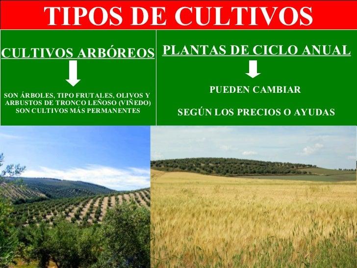 Elementos del espacio agrario - Tipos de espacios ...