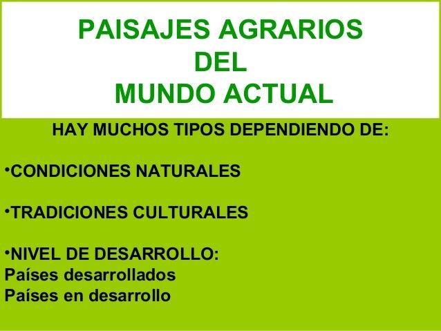 PAISAJES AGRARIOS DEL MUNDO ACTUAL HAY MUCHOS TIPOS DEPENDIENDO DE: •CONDICIONES NATURALES •TRADICIONES CULTURALES •NIVEL ...