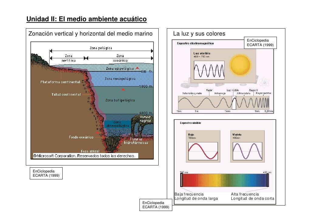 Unidad II: El medio ambiente acuáticoZonación vertical y horizontal del medio marino            La luz y sus colores      ...