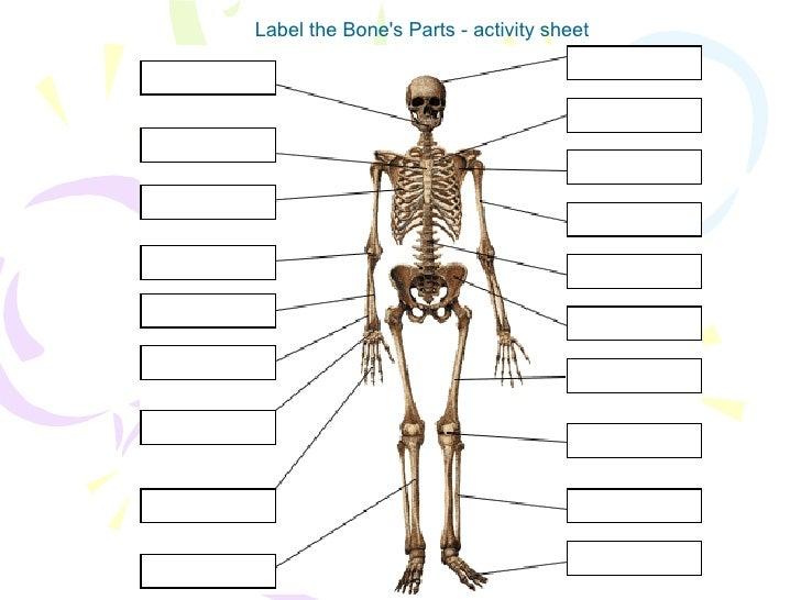 human body skeleton. Black Bedroom Furniture Sets. Home Design Ideas