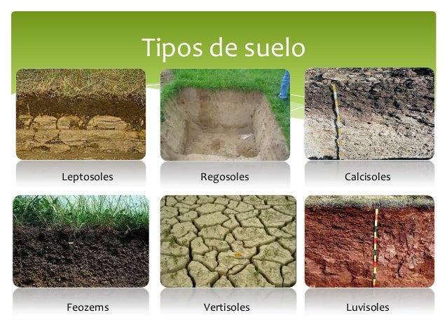 Prevenci n y control de la contaminaci n del suelo - Tipos de suelos ...