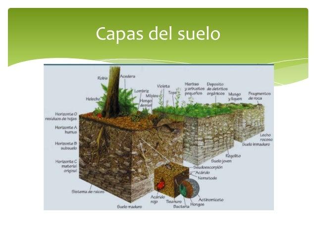 Prevenci n y control de la contaminaci n del suelo for El suelo y sus capas