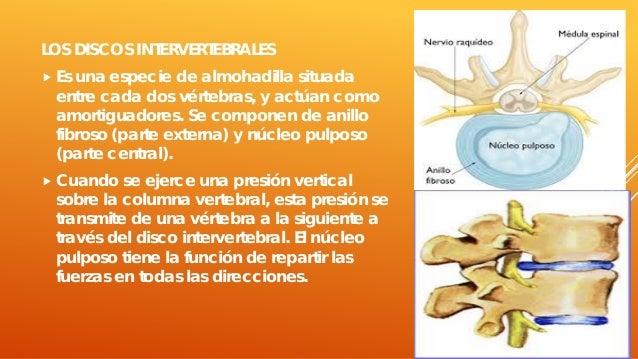 La gimnasia médica a la inestabilidad sheynogo del departamento de la columna vertebral