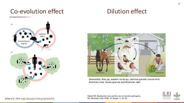 17 Co-evolution effect Dilution effect Zohdy et al., 2019. https://doi.org/10.1016/j.pt.2019.03.010 Generalists: blue jay,...