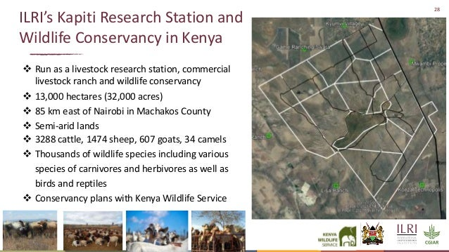 28 ILRI's Kapiti Research Station and Wildlife Conservancy in Kenya  Run as a livestock research station, commercial live...