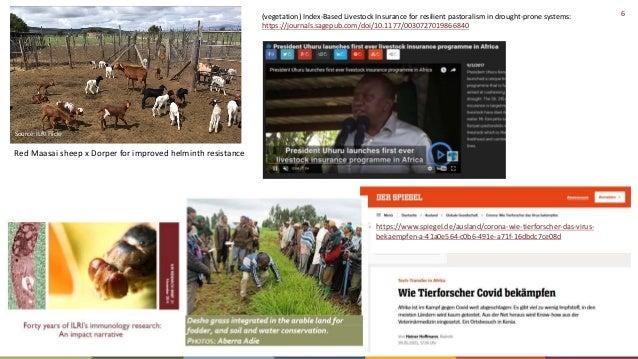 6 Source: ILRI Flickr Red Maasai sheep x Dorper for improved helminth resistance (vegetation) Index-Based Livestock Insura...