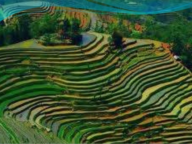  b. Contour plowing    is a method of farming whereinfarmers follow the contours of the landin planting crops. This metho...