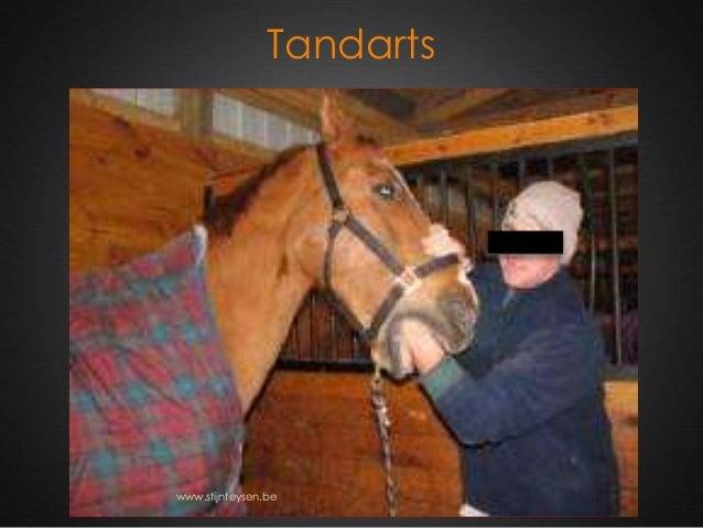 Tandarts www.stijnteysen.be