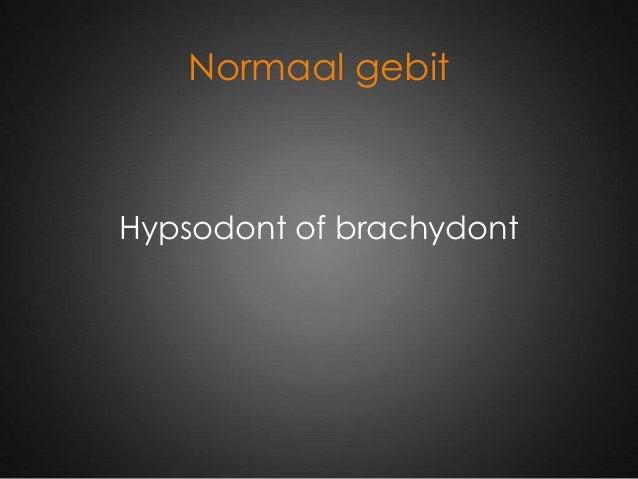 Normaal gebit Hypsodont of brachydont