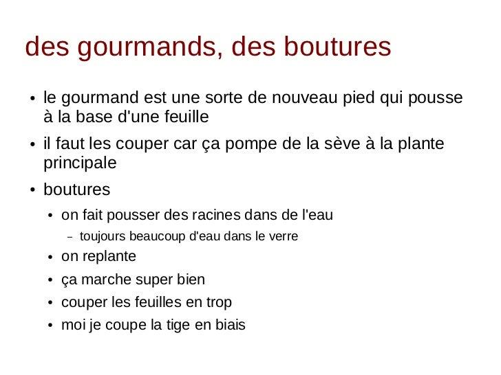 retour d 39 exp rience sur la culture de la tomate en appartement parisi. Black Bedroom Furniture Sets. Home Design Ideas