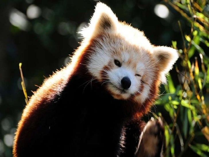 W lesie, kiedy spotkasz zwierzę,nie zbliżaj się do niego - z daleka oglądaj!