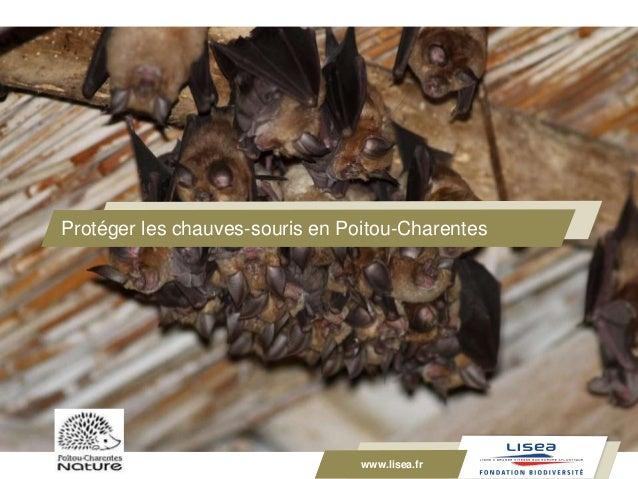 www.lisea.fr Protéger les chauves-souris en Poitou-Charentes www.lisea.fr