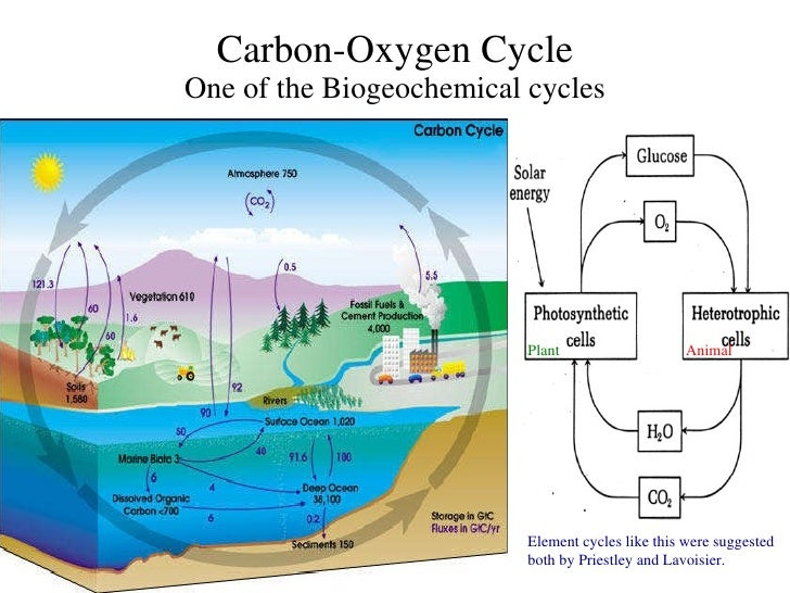 Priestley lavoisier 112 carbon oxygen cycle ccuart Choice Image