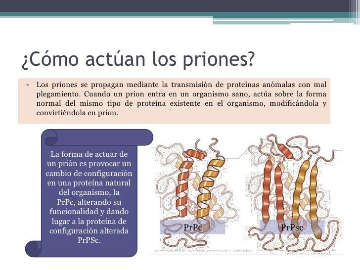 Priones - Como funcionan los emisores termicos ...