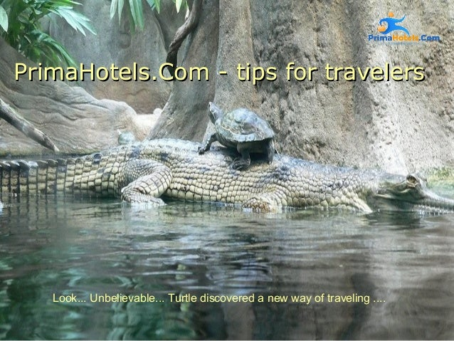 PrimaHotels.Com -PrimaHotels.Com - tips for travelerstips for travelers Look... Unbelievable... Turtle discovered a new wa...