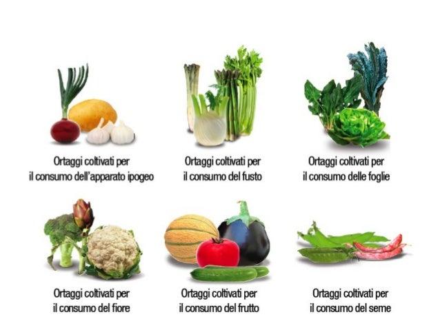 CRUCIFERAE La fam ig lia de lle Crucife rae , o Brassicace ae , co m pre nde un g ran num e ro di piante e rbace e . Le sp...