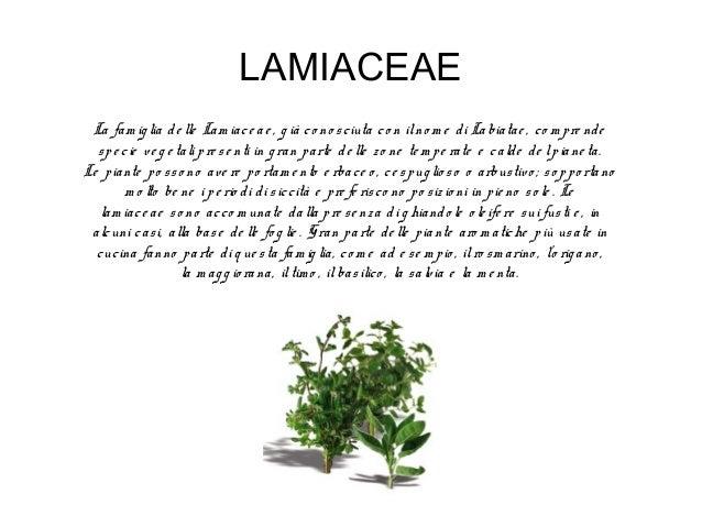 LILIACEAE La fam ig lia de lle Liliace ae riunisce un g ran num e ro di piante e rbace e m o lto co m uni. La m ag g io r ...