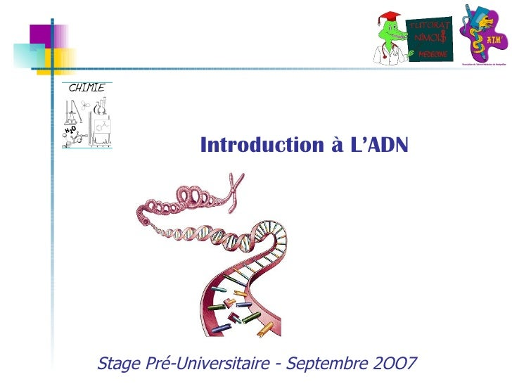 Introduction à L'ADN