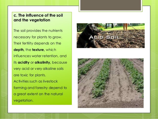 c. The influence of the soil and the vegetation The soil provides the nutrients necessary for plants to grow. Their fertil...