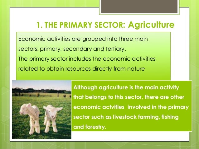 1. THE PRIMARY SECTOR: Agriculture Economic activities are grouped into three main sectors: primary, secondary and tertiar...