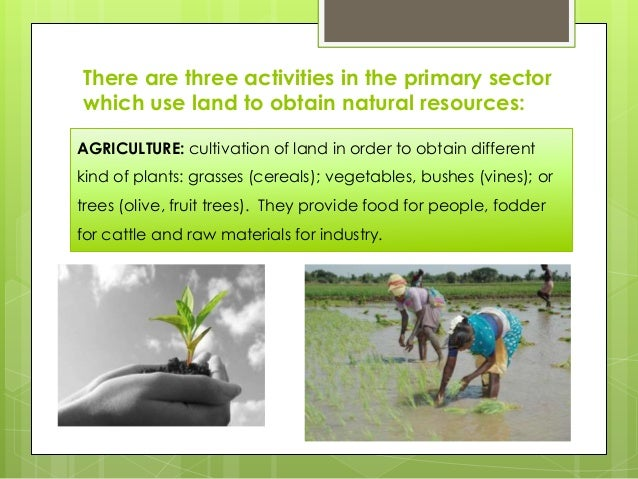 the primary sector 1 an area of the economy in which businesses share the same or a related product or service economies are comprised of four sectors the primary sector involves the extraction and harvesting of natural products from the earth (eg, agriculture, mining and forestry.