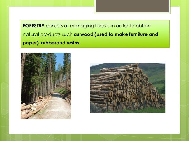 FORESTRY consists of managing forests in order to obtain natural products such as wood (used to make furniture and paper),...