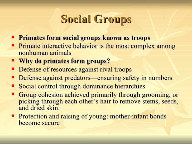 primate social behaviour Frans de waal studies primate social behavior -- how they fight and reconcile,  share and cooperate frans de waal studies primate social.
