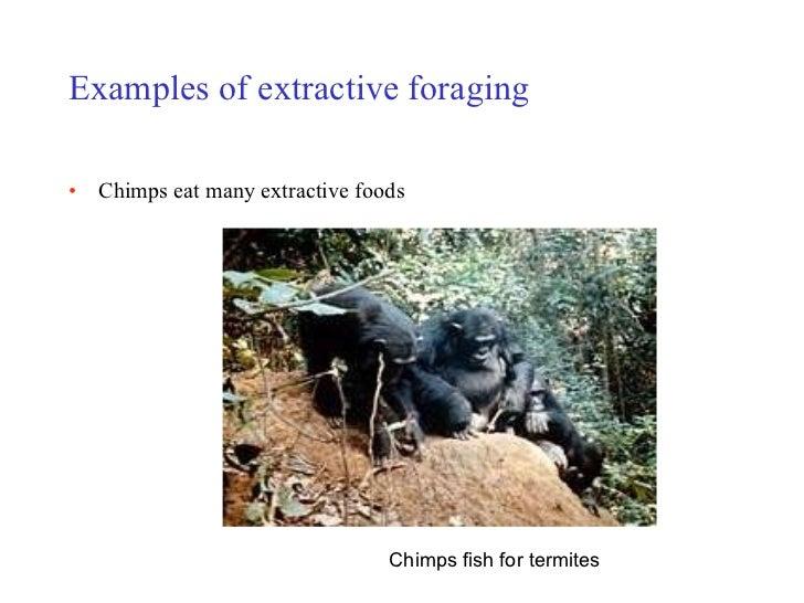 primate intelligence Anthropology 1: introduction to physical anthropology lecture 12 – 4/5/10: primate intelligence smc spring 2010 rebecca frank.