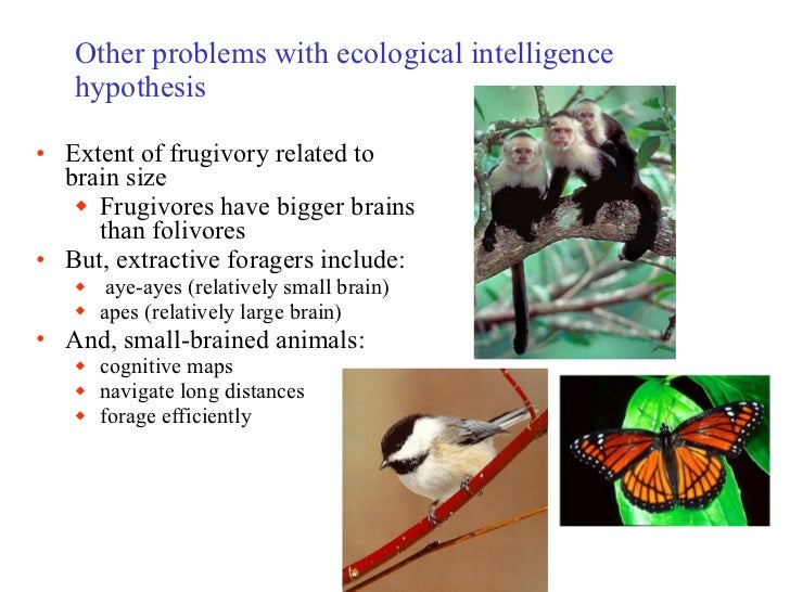 primate intelligence One of the main reasons why we are so interested in the other primates is that by looking at them we can obtain some ideas of what our ancestor must have been like a few millions years ago even though, we are not descended from any modern-type monkey.