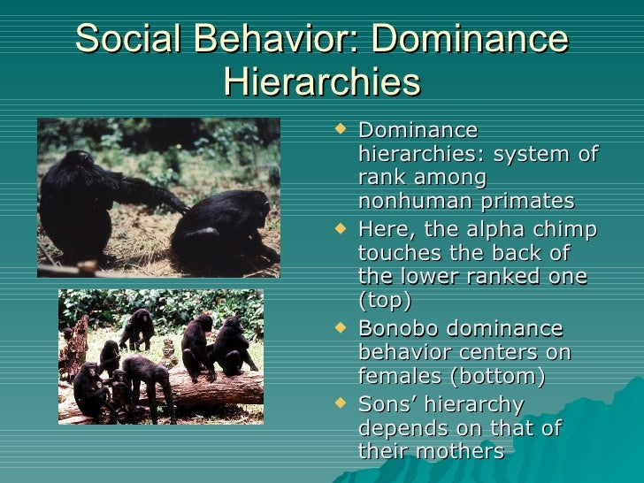 primate behavior Because primates are among the most social of animals, social behavior is one of the major topics in primate research this is a broad subject that includes all aspects.