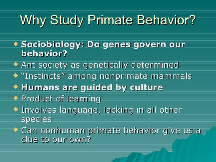primate behavior The primate behavior and ecology major is an interdisciplinary program that prepares graduates for advanced degrees in the field or to enter the work force in the area of animal care giving faculty facilities.