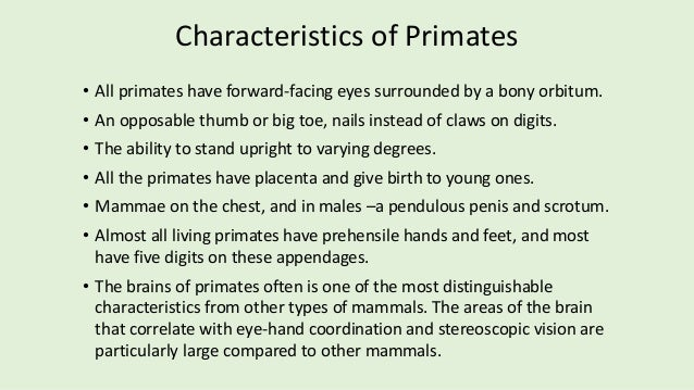 order of primate Primate any member of the mammalian order primates, including lemurs, tarsiers, monkeys, apes and humans these mammals have a placenta, possess nails rather than.