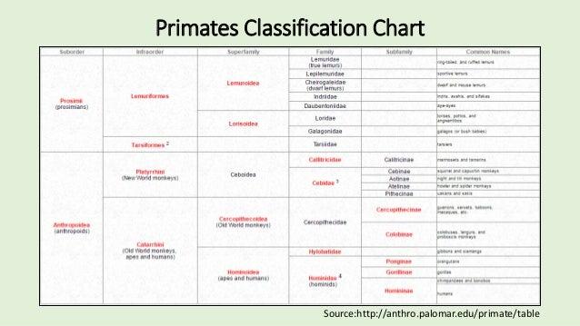 Chimpanzee Taxonomy Primates of the...