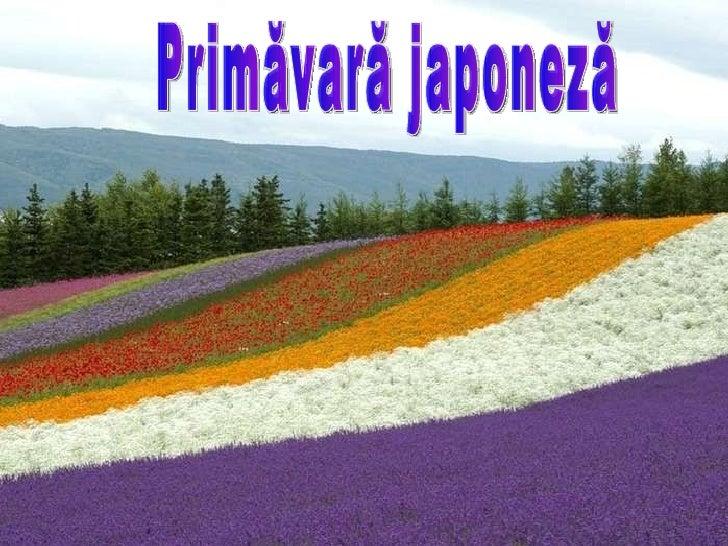 Primăvară japoneză