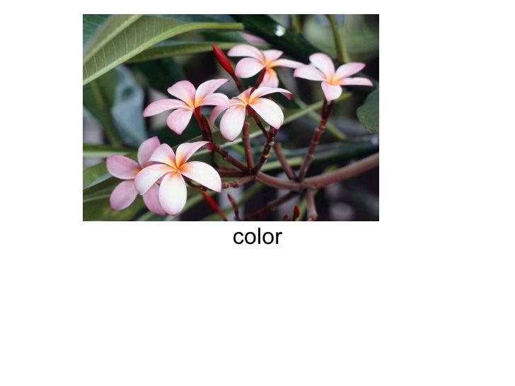 primavera color