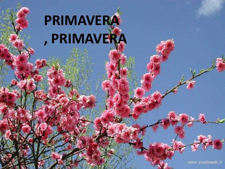 PRIMAVERA, PRIMAVERA