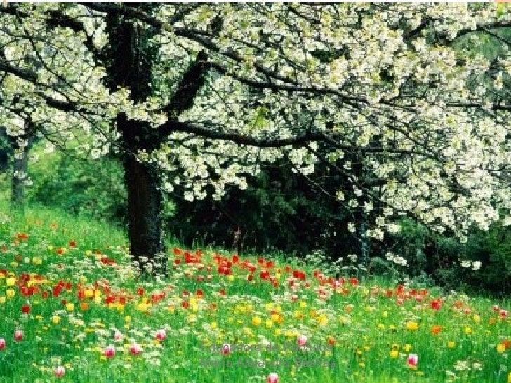 Primavera Slide 3
