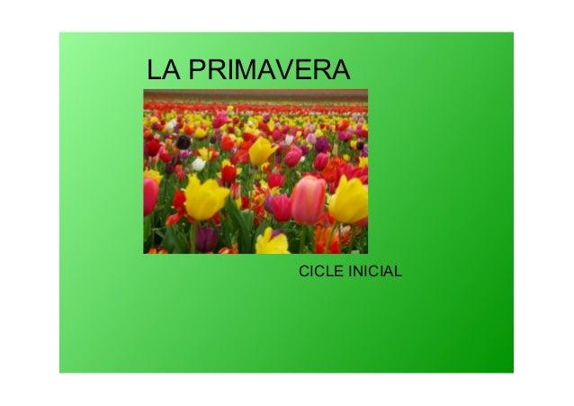 LAPRIMAVERA CICLEINICIAL