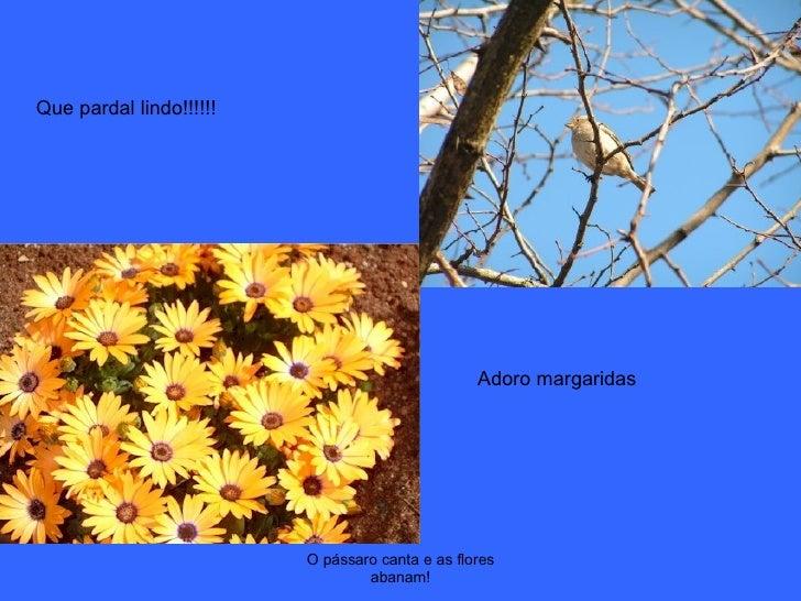 O pássaro canta e as flores abanam! Que pardal lindo!!!!!! Adoro margaridas