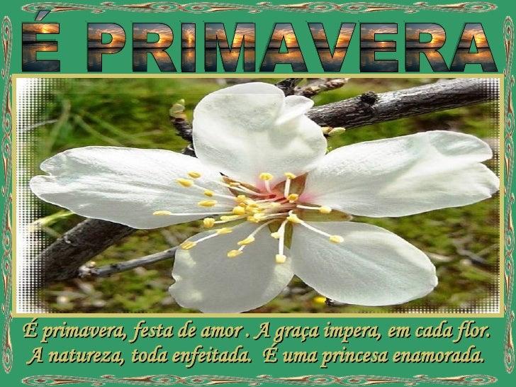 É primavera, festa de amor . A graça impera, em cada flor. A natureza, toda enfeitada.  É uma princesa enamorada. É PRIMAV...