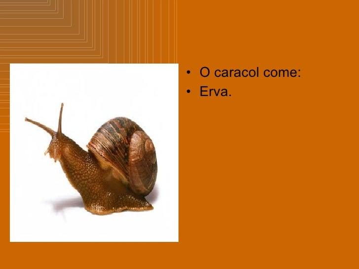 <ul><li>O caracol come: </li></ul><ul><li>Erva. </li></ul>