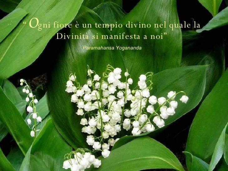 """"""" O gni fiore è un tempio divino nel quale la Divinità si manifesta a noi"""" Paramahansa Yogananda"""
