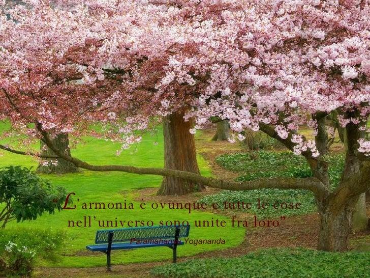 """"""" L 'armonia è ovunque e tutte le cose nell'universo sono unite fra loro"""" Paramahansa Yogananda"""