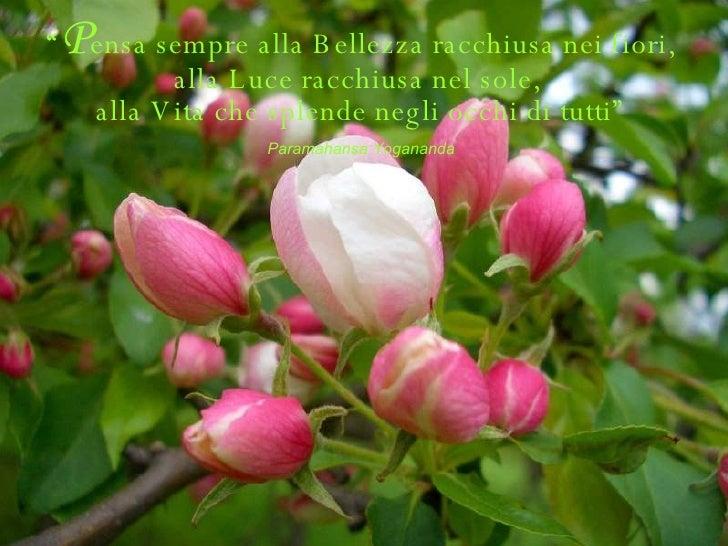 """"""" P ensa sempre alla Bellezza racchiusa nei fiori, alla Luce racchiusa nel sole,  alla Vita che splende negli occhi di tut..."""