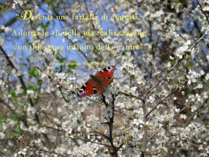 """"""" D iventa una farfalla di eternità! Adorna le ali della tua realizzazione con il fascino infinito della natura"""" Paramahan..."""