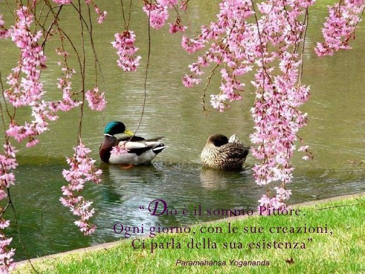 """"""" D io è il sommo Pittore. Ogni giorno, con le sue creazioni, Ci parla della sua esistenza"""" Paramahansa Yogananda"""
