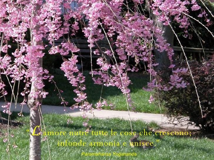 """ L 'amore nutre tutte le cose che crescono; infonde armonia e unisce."" Paramahansa Yogananda"