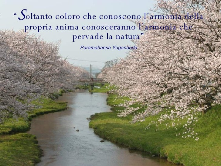 """"""" S oltanto coloro che conoscono l'armonia della propria anima conosceranno l'armonia che pervade la natura"""" Paramahansa Y..."""